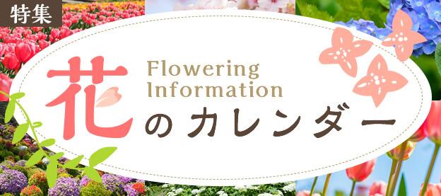 【特集】花のカレンダー Flowering Information